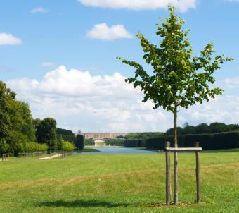 Adoptez un arbre
